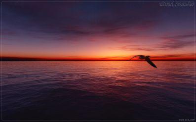 Despedida-volar hacia el horizonte